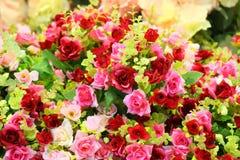 De rozen van de doek Stock Afbeelding