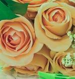 De rozen van de perzik Stock Foto