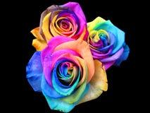 De rozen van de regenboog stock foto's