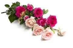 De rozen van de schoonheid Royalty-vrije Stock Foto