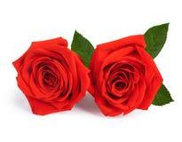 De rozen van een paargift op valentijnskaartdag royalty-vrije stock foto