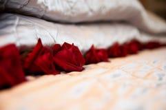 De Rozen van het bed Stock Foto