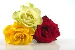 De rozen van het boeket Stock Afbeelding