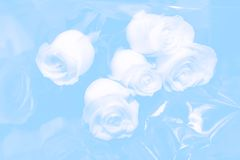 De rozen van het huwelijk Royalty-vrije Stock Fotografie