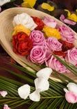 De rozen van het kuuroord Stock Afbeeldingen