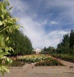 De rozen van de parksteeg op een zonnige de zomerdag stock afbeelding