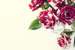 De rozen van de tijgerstreep royalty-vrije stock fotografie