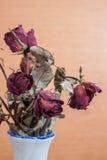 De rozen verwelken en drogen tegen de tijd dat Stock Afbeeldingen