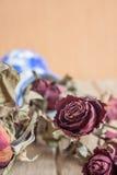 De rozen verwelken en drogen tegen de tijd dat Stock Foto's