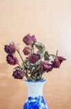 De rozen verwelken en drogen tegen de tijd dat Royalty-vrije Stock Fotografie