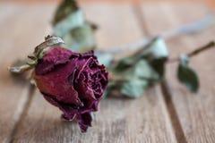 De rozen verwelken en drogen tegen de tijd dat Stock Foto