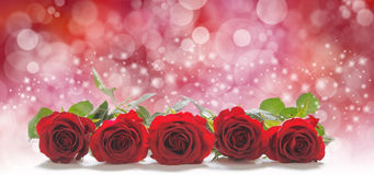 De rozen voor de mensen u houden van royalty-vrije stock foto's