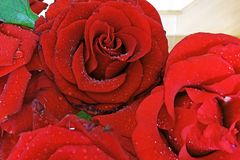 De rozen in water daalt dicht omhoog royalty-vrije stock foto