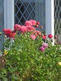 De rozenpapavers van de plattelandshuisjetuin met leaded roostervensters royalty-vrije stock foto's