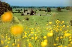 De ruïne van het kasteel binnen groene weiden Stock Afbeelding