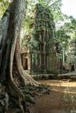 De ruïnes van de Tempel van Ta Prom, het Historische Park van Angkor, Siem oogsten, Kambodja royalty-vrije stock foto