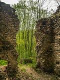 De ruïnes van een gebouw in het bos stock afbeelding