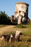 De ruïnes van een oud kasteel in het dorp van Chervonograd ukraine stock foto