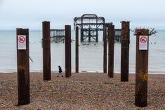 De ruïnes van het Westenpijler, Brighton, East Sussex, UK, op de dag van de winter in December at low tide wordt het gefotografee royalty-vrije stock afbeeldingen