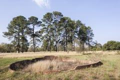 De Ruïnes van landschapsbomen Stock Fotografie