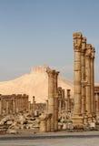 De ruïnes van Palmyra en het Kasteel van Qala'At Ibn Maan Royalty-vrije Stock Afbeelding