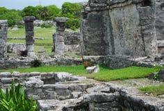 De Ruïnes van Tulum Royalty-vrije Stock Fotografie