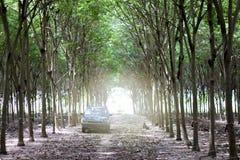 De rubberboomaanplanting van de bestelwagenauto royalty-vrije stock afbeeldingen