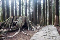 De rubriek van de rotsweg aan het bos Stock Foto