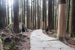 De rubriek van de rotsweg aan het bos Royalty-vrije Stock Foto's