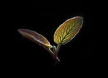 De rug stak bladeren aan Royalty-vrije Stock Afbeeldingen