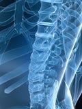 De rug van de röntgenstraal stock illustratie