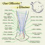 De rug van een menselijke voet vector illustratie