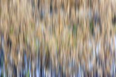 De rug van het onduidelijke beeld Stock Afbeelding