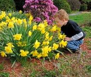 De Ruikende Gele narcissen van de jongen Royalty-vrije Stock Afbeelding