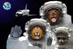 De ruimte is beschikbaar aan allen Draag, wasbeer en leeuw in ruimte tegen de achtergrond van het ruimteveer en de aarde royalty-vrije stock foto's