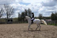 De ruiter die van de dressuur haar wit paard schoolt Stock Fotografie