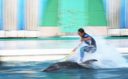 De ruiter van de dolfijn Stock Foto's