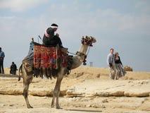De Ruiter van de kameel Royalty-vrije Stock Afbeeldingen