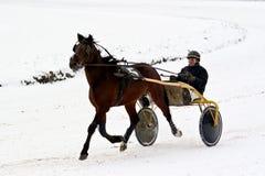 De ruiter van het paard. stock foto's