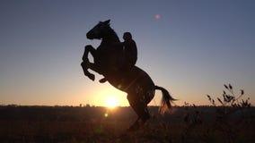 De ruiter zit op een paard en geeft hem twee benen in zonsondergang Langzame Motie Silhouet Zachte nadruk stock video