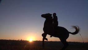 De ruiter zit op een paard en geeft hem twee benen in zonsondergang Langzame Motie Silhouet Zachte nadruk stock footage