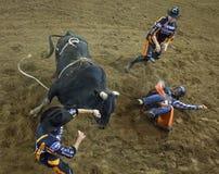 De ruitercowboys van de rodeostier Stock Afbeeldingen