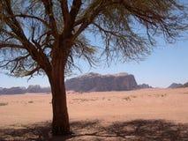 De rumwoestijn iv. van Wadi Stock Foto's
