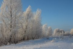 De Russische de bomensneeuw van de de winter bossneeuw behandelde van de de vorstberk van de wegensneeuw de skisporen in de sneeu stock fotografie