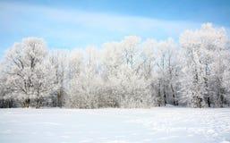 De Russische winter in Januari Stock Foto's