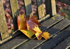 De Rust van de herfst Royalty-vrije Stock Fotografie
