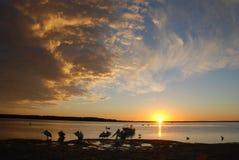 De rust van de pelikaan Royalty-vrije Stock Fotografie