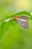De rust van de vlinder onder een blad Royalty-vrije Stock Fotografie