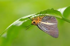 De rust van de vlinder onder een blad Stock Foto