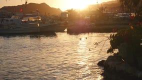 De rust van luxejachten in de haven bij zonsondergang stock footage